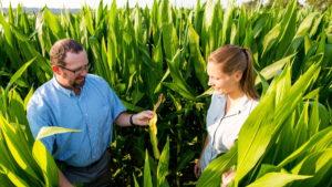 trent roberts in corn